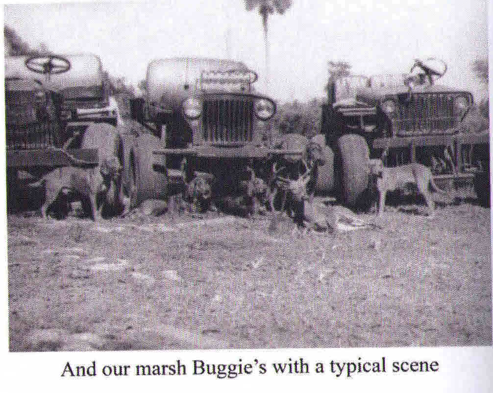 swampbuggies and dogs